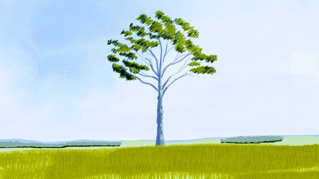 フランスの牧草地にありそうな木