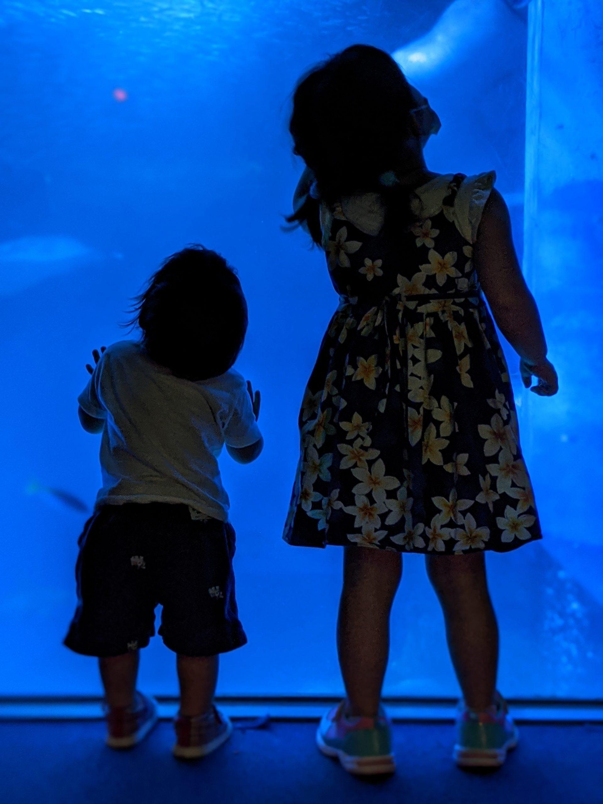 水族館の水槽を見上げる姉弟