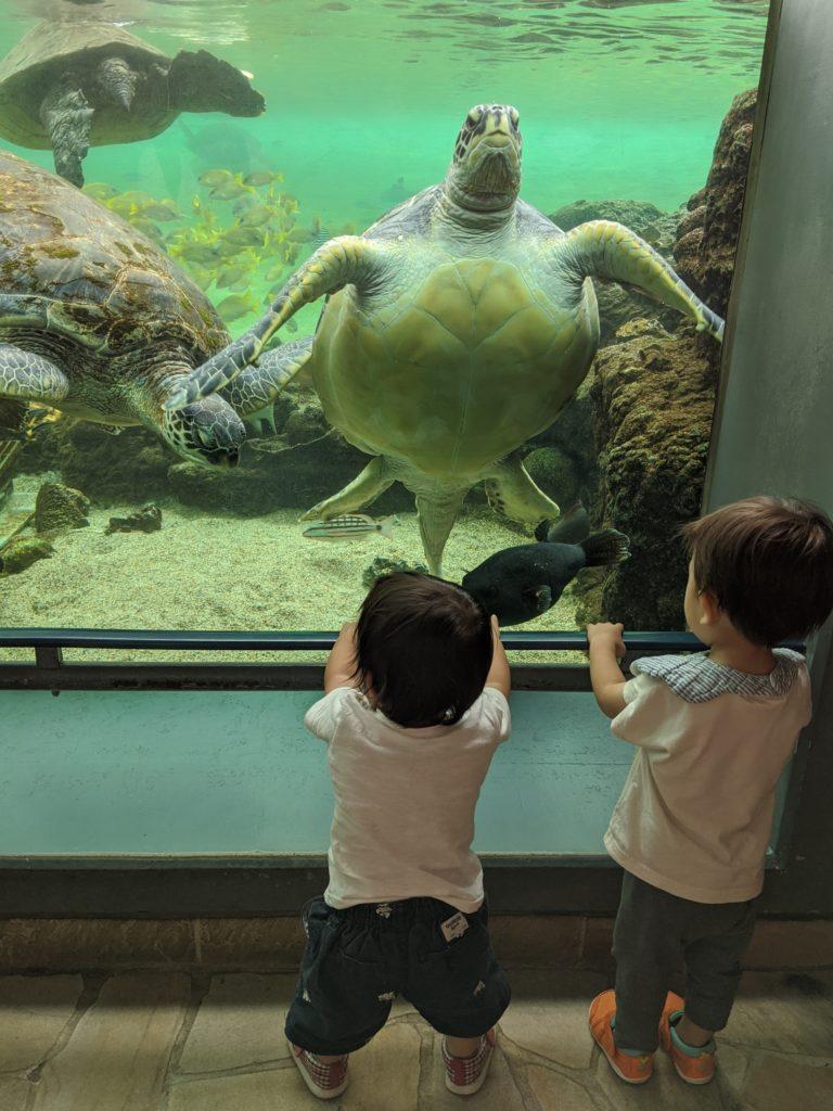 ウミガメと対峙する息子